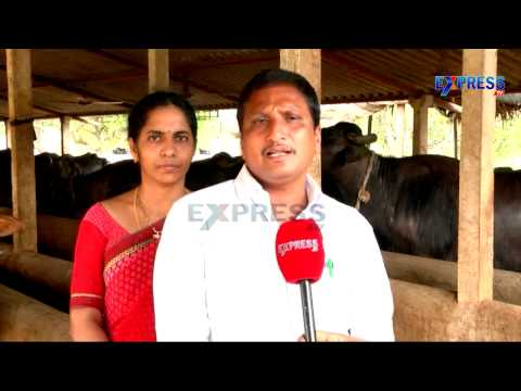 Commercial DAIRY Successful Farming by Khammam Farmer - ExpressTV