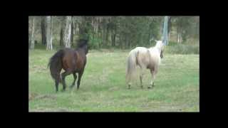Horses Meet For The First Time