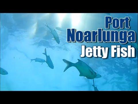 Port Noarlunga Jetty Fish
