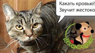 Кровь в кале у кошки (собаки), основные причины