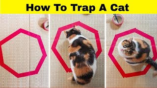 30 Photos Proving That Cat Logic Is Hilarious