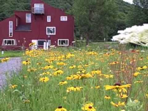 vermont wildflower farm youtube