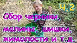 В тайгу за черникой, малиной, смородиной, шишкой и т.д. ч.2 (08.17г.) (рел.) Семья Бровченко.