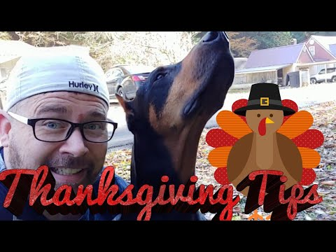 Doberman Pinscher Vlog - THANKSGIVING - How to Feed Your Dog Safely During the Holidays