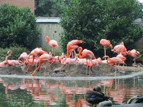 Smithsonian's National Zoo, Washington