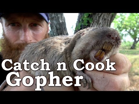 Catch and Cook GOPHER in Cactus 100% WILD TACO!!! Ep18 | PRIMITIVE COOKING, Survival Challenge!