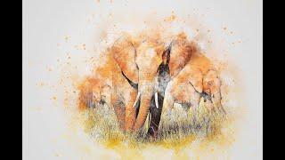 Direct- Connexion aux peuples des Éléphants- Helene Sellier -