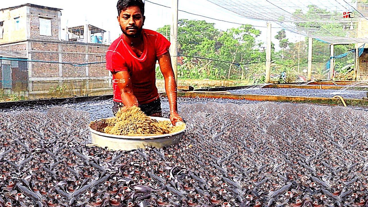 Teknologi Tangki Budidaya Ikan untuk Meningkatkan Produksi Ikan