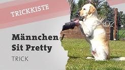 Hund Trick Männchen machen beibringen | Hundetrick Sit Pretty