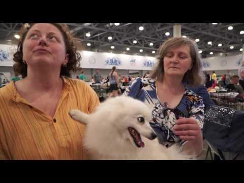 Японский шпиц на World Dog Show 2016