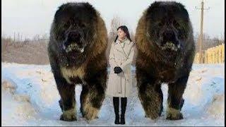 私たち人間の中で一番多く変われているペット。それは犬です。 小型犬か...