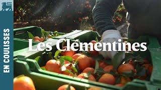Les Clémentines