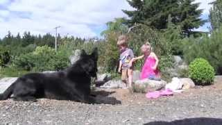 Children With Protection Trained German Shepherd Dog