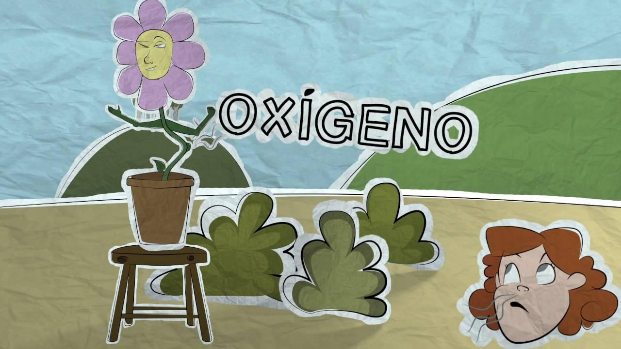 C mo se alimentan las plantas youtube for Como se llaman las plantas ornamentales