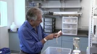 Various Types Of Crinoids