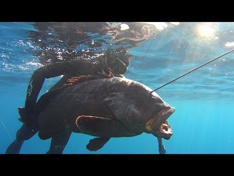 Spearfishing Sakis Tsonis Dusky Grouper
