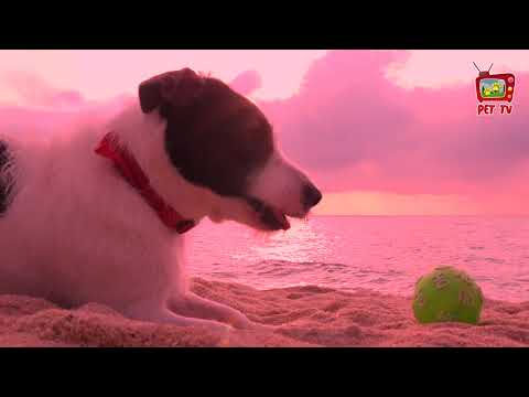 DOG Relaxation, DOGTV Relaxation (Vídeo relaxante para cães e PET´s)