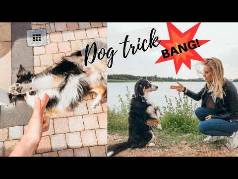 Hands up or I'll shoot! | HOW TO | 'BANG!' DOG TRICK