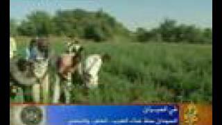 السودان .. هل فعلا سلة غذاء العالم العربي