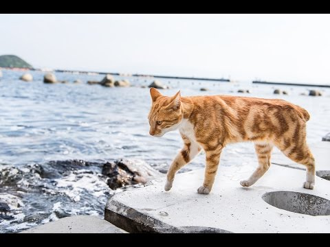 The Truth About Cat Island