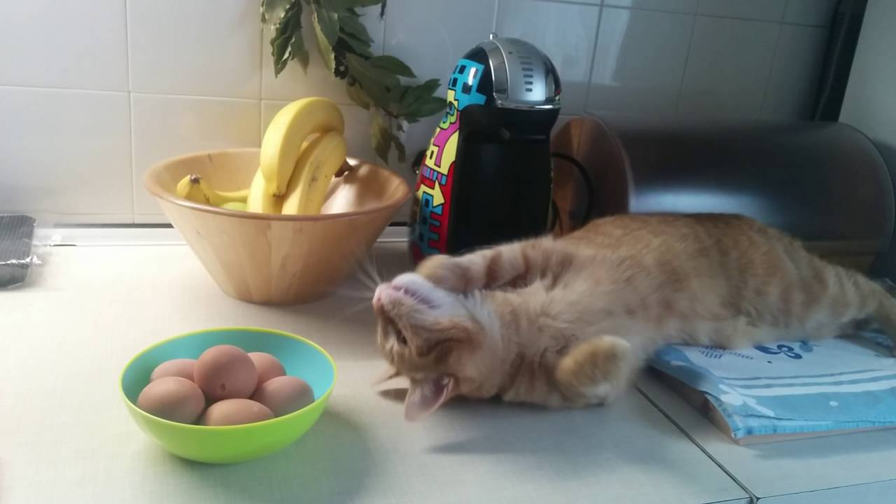 Limit cat & Hard boiled eggs
