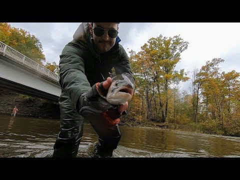 STLHD - Fly Fishing For Steelhead On Lower Elk Creek. Nov 2018
