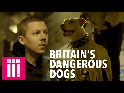 Professor Green on the Murky World of Dangerous Dogs