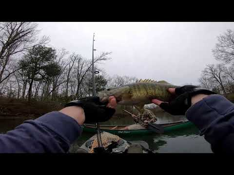 TROPHY BASS On The Stones River At Nice Mill Dam!