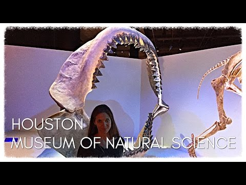 Houston, Texas, USA - MUSEUM OF NATURAL SCIENCE, HERMANN PARK