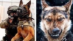 Die härteste Hundeausbildung der Spezialeinheiten!