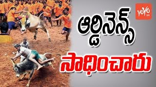 జల్లికట్టుకు ఓకే   TN Gets Central Approval for #Jallikattu   YOYO TV Channel