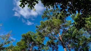 4K 디지털액자 나무 하늘 구름 soothing vid…