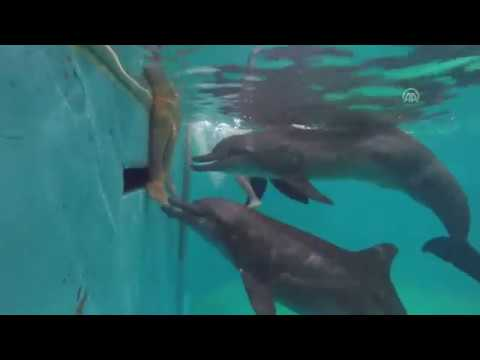 Dolphin therapy in Jakarta for kids with autism