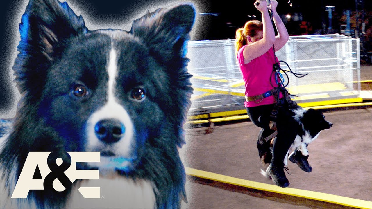 Border Collie TAKES DOWN Police K9 To Win Competition | America's Top Dog | A&E