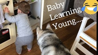 Baby Steals Food From My Kitchen To Feed The Huskies!!... [TRY NOT TO LAUGH]