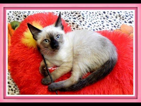 Как назвать маленькую кошку