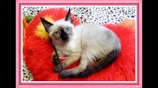 Самые лучшие имена для кошек ТОП 10 /Клички, имена для кошек/Как назвать кошку