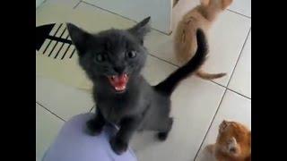 Голодные котята хотят кушать. Маленькие котята просят еду.