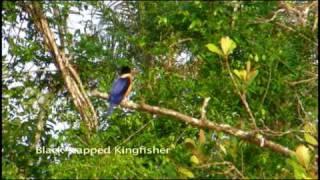 Sensational Sundarbans of Bangladesh - Part 1