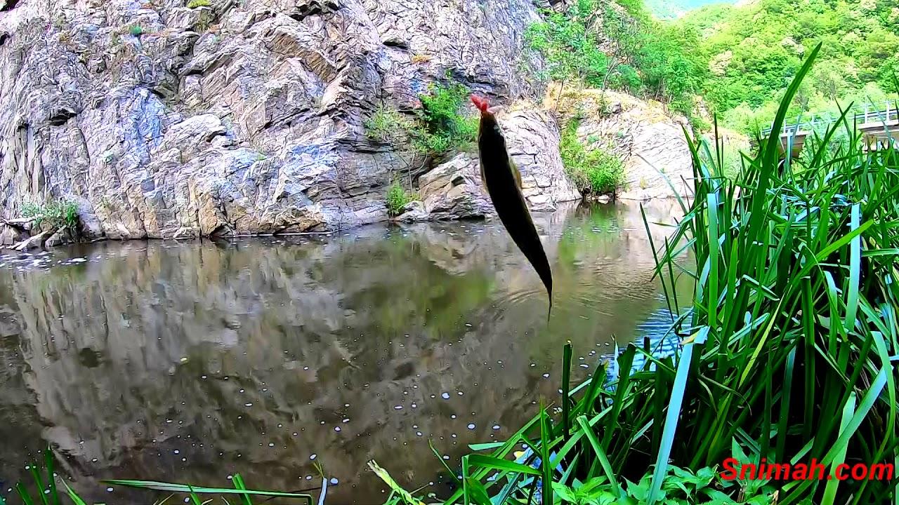 Риболов на мряна по река Чепинска - YouTube