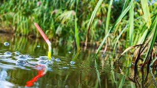 ПЬЯНЫЙ ПОПЛАВОК на КАРАСЯ РЕЦЕПТ ФЕРМЕНТИРОВАННОЙ ПШЕНИЦЫ рыбалка на карася