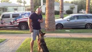 Arizona Off Leash Obedience Dog Training
