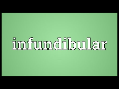 Header of infundibular