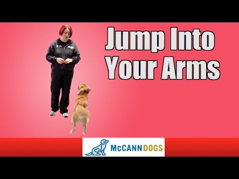 Dog Tricks: Jump Up Into Your Arms