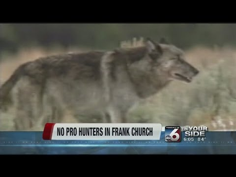 No professional wolf hunters from Fish and Game in Frank Church Wilderness