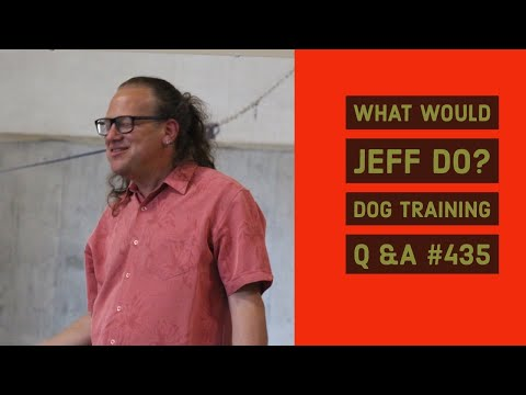 Stop Dog Tail Chasing | Stop dog barking near fence | What Would Jeff Do? Dog Training Q&A #435