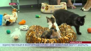 Волгоградский приют для животных на грани закрытия