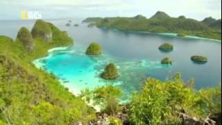 FroocTum.Ru-видео Дикая природа Индонезии Затерянные миры Папуа