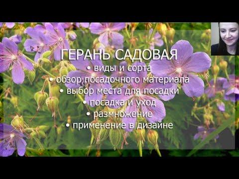 """Вебинар """"Герань садовая"""""""