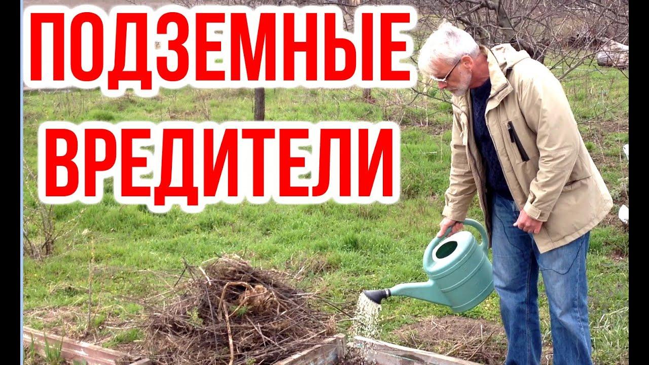Подземные вредители растений / Метавайт / Игорь Билевич